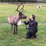 Cob House The Reindeer Whisperer