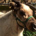 Haughton The Reindeer WhispererThe Reindeer Whisperer